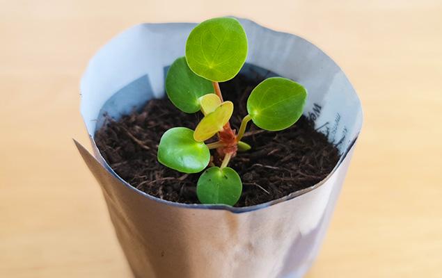 Kleine Pflanze in Blumentopf aus Papier